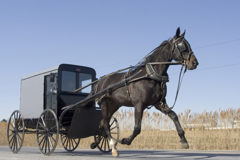 Amish Country Ohio iconic black Amish buggy with beautiful black horse