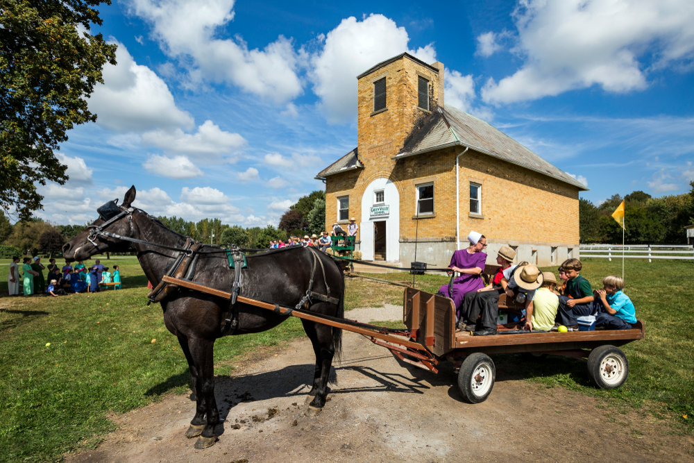 Ohio Amish riding in wagon pulled by black  horse with other Amish and Amish building in background.