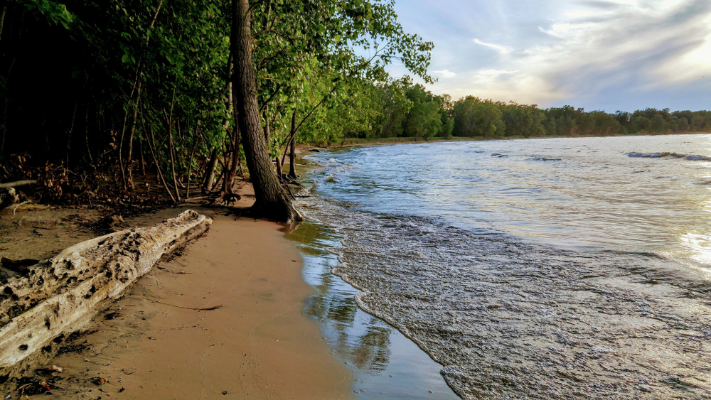Sandy beach with large trees and driftwood on shoreline. Water lapping to shorre.