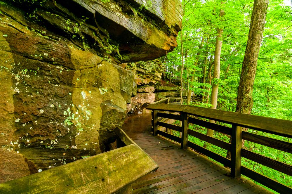 Boardwalk through green forest best Ohio hikes. to Brandywine falls