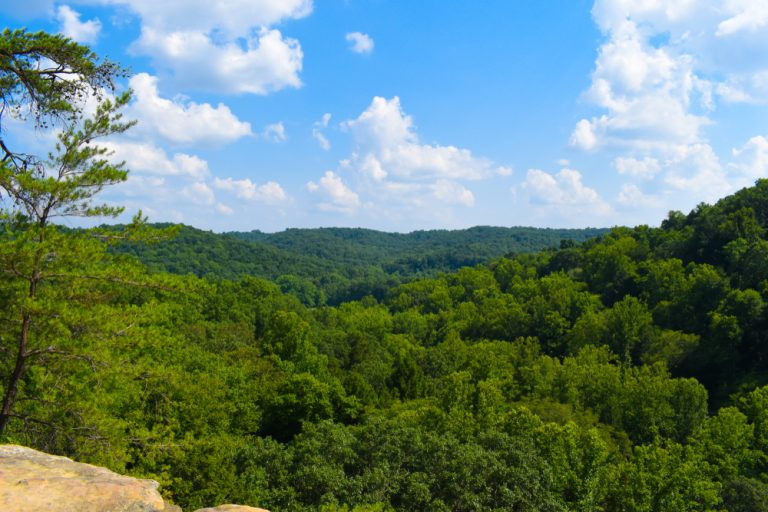 view of the tops of many green trees on Ohio hike