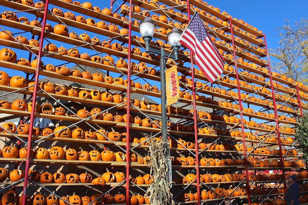 Rows of orange pumpkins at Pumpkin Fest in Highwood, IL.