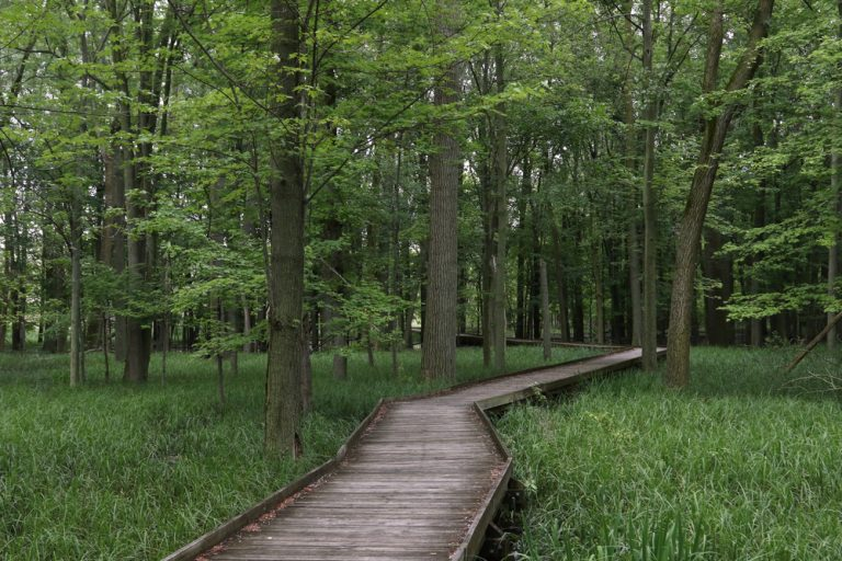 Romantic Ohio getaways sometimes are private walks through the forested boardwalk-trails of Maumee State Park.