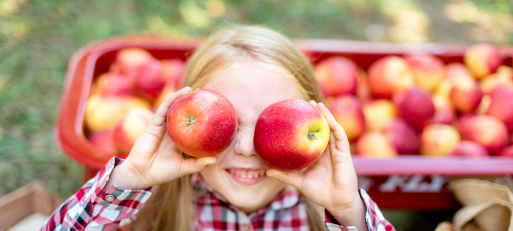 Young girl playing with red apples at Ohio apple orchard. Red apples in wagon in background.