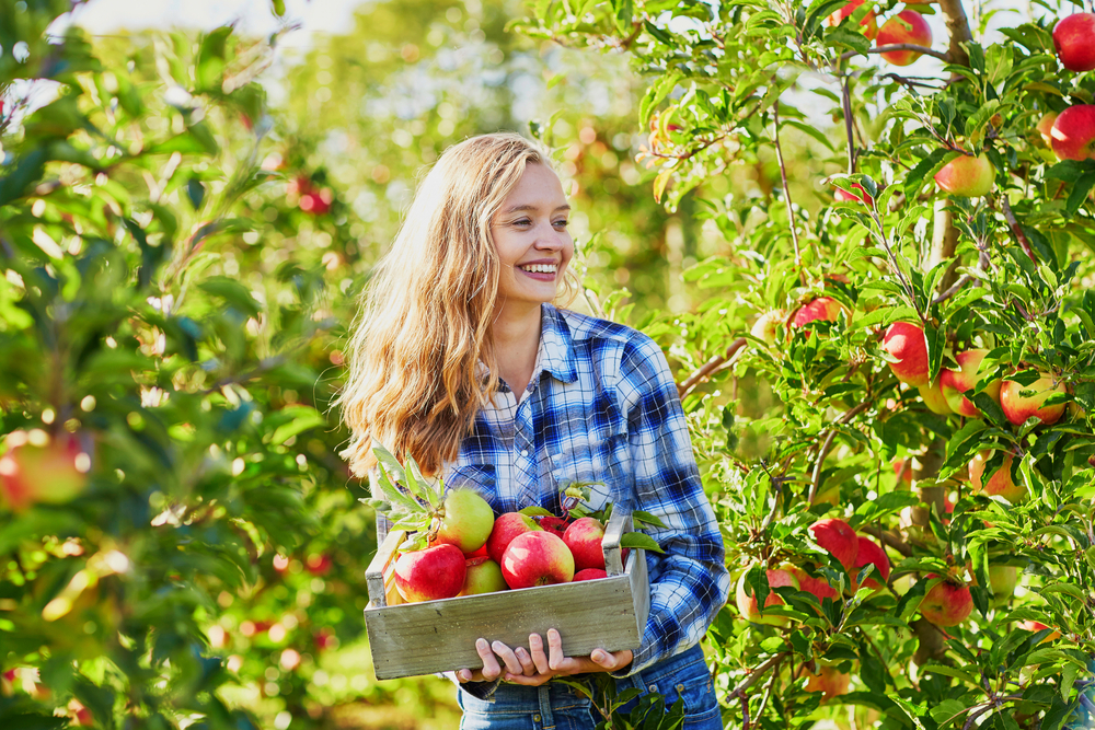 Blonde woman in blue plaid shirt, smiling while holding basket of red apples, standing in Ohio apple orchards.
