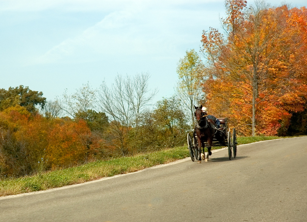 Amish man driving horse and buggy on side of road with autumnal trees behind and alongside him.