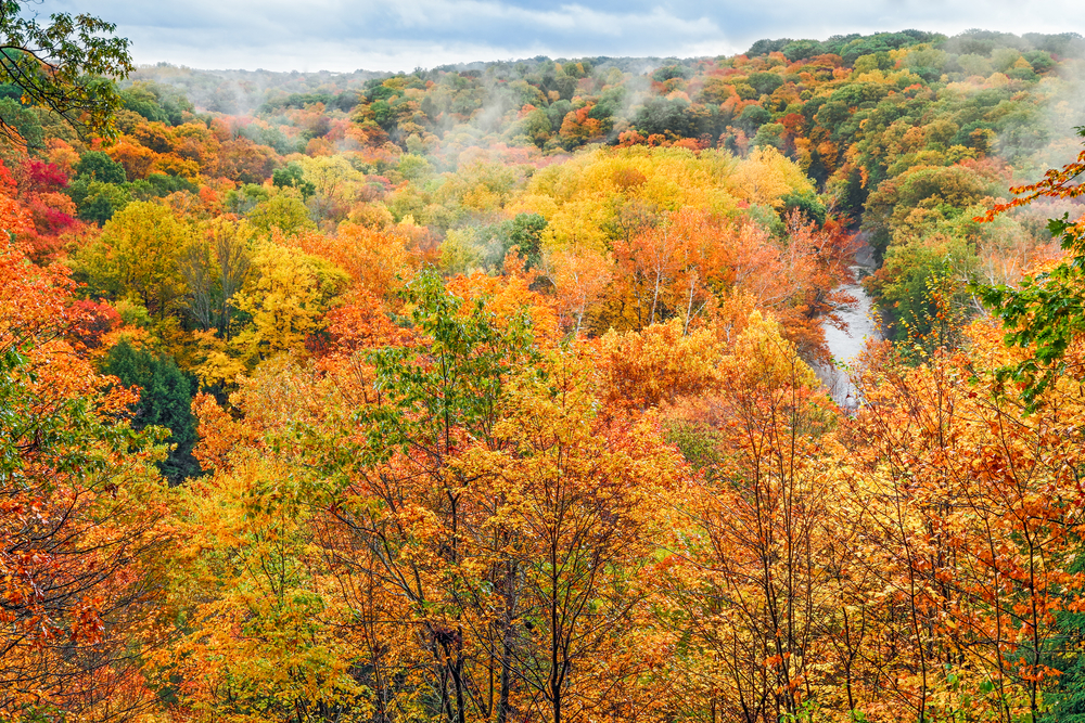 Spectacular fall colors of oranges and yellows with gently morning mist. Fall foliage in Ohio