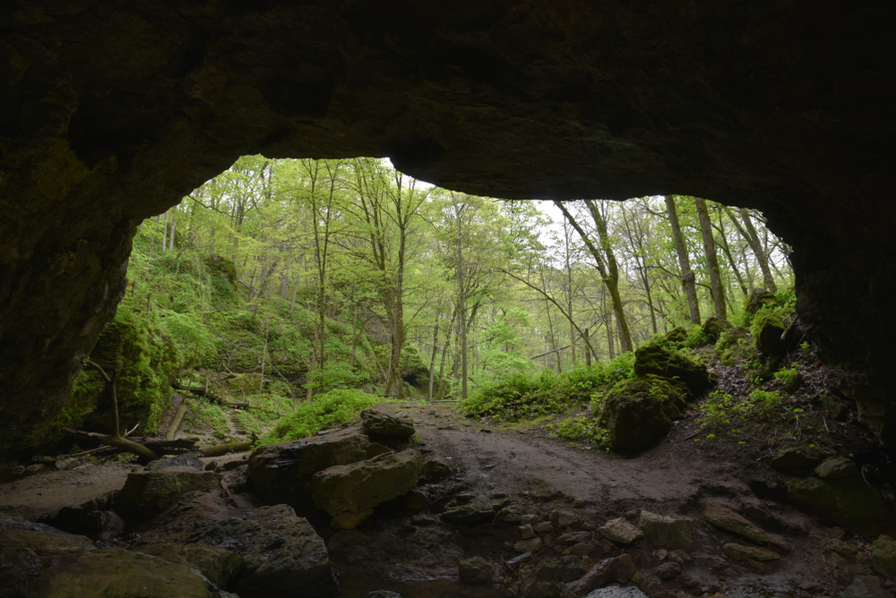 Looking out from a cave to the entrance with trees in the background. One of the caves in Iowa