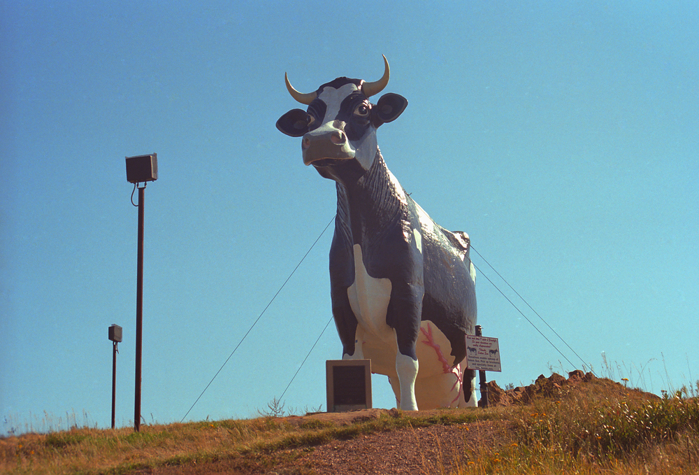 A large cow statue in North Dakota on a sunny day one of the best Midwest Road Trips