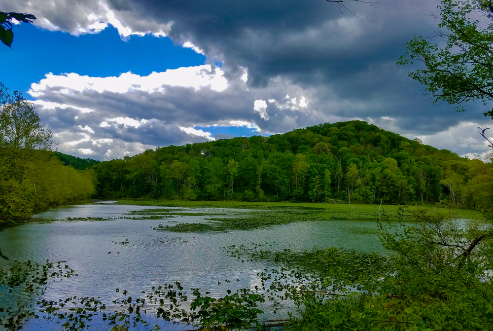 Lake with blue water surrounded by evergreen forest with blue sky/puffy clouds in background.