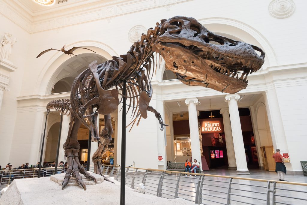 Dinosaur skeletal replica inside large white room with decorative arches.