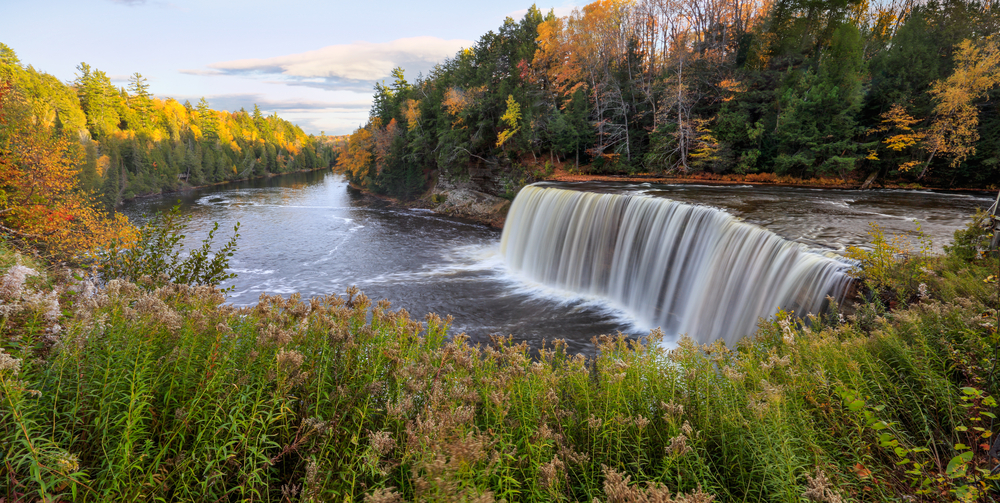 A view of Tahquamenon Falls in the fall. The falls are both tall and long. They lead to a long river and are surrounded by trees. The trees are pine trees and trees with orange and yellow leaves. In front of the falls there is lots of tall grass