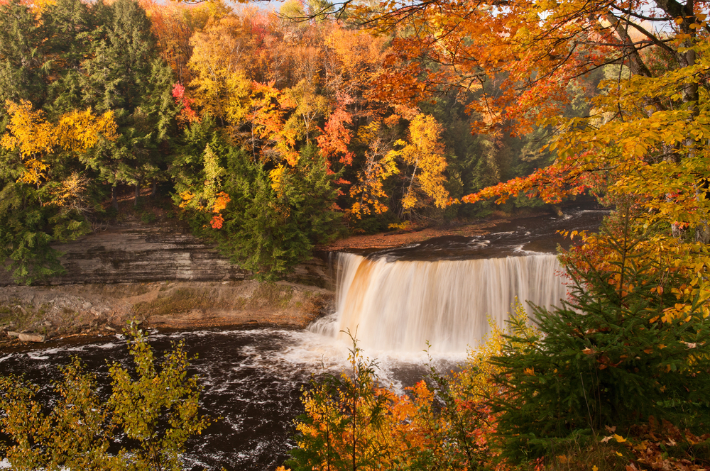 A view from the river bank look directly at the Tahquamenon Falls in Michigan. The falls are roaring down the river and are surrounded by trees. The trees have mostly orange and yellow leaves. Some trees have red leaves while others are still very green.