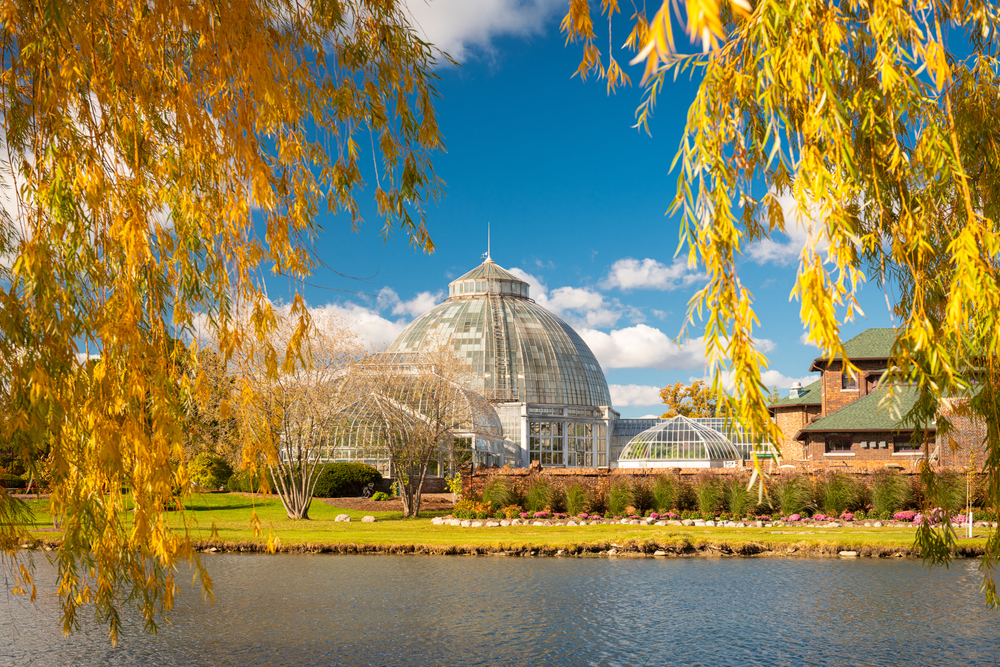 A view under willow branches with yellow and orange leaves. You can see a small pond and across the pond a conservatory structure with domed glass ceilings. The sky is very blue and there are fluffy clouds.