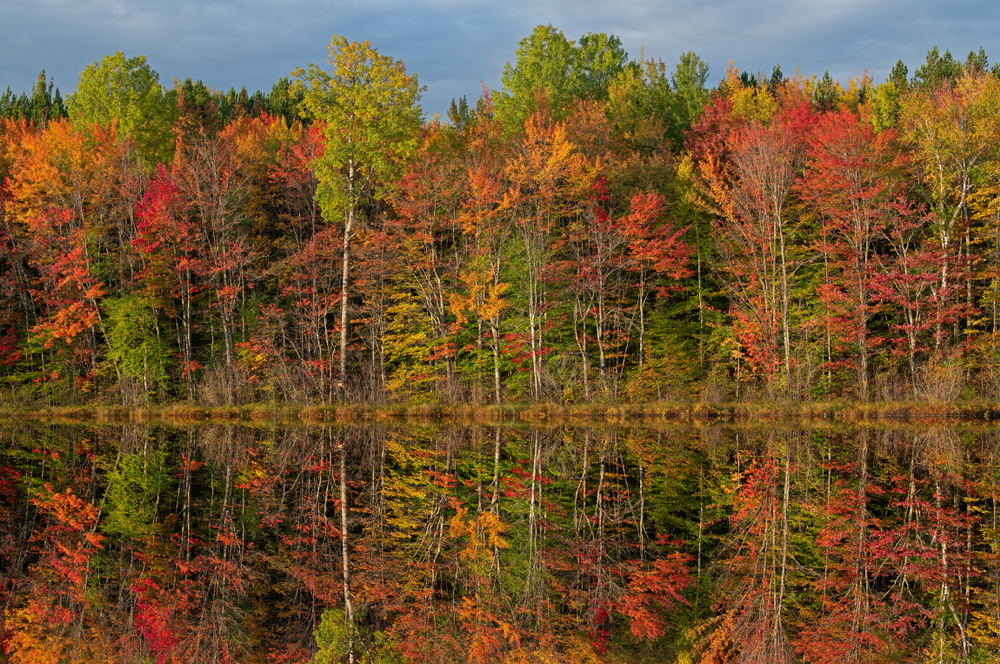 A line of trees on a lakeshore. The trees have red, yellow, orange, and some green leaves. The sky is cloudy but still blue. The trees are perfectly reflected in the lake waters. Its a beautiful view of Fall in Michigan.