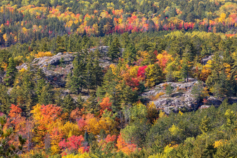 The view of the valley of Sugarloaf Mountain. There are rock formations, and lots of trees. Many of the trees are pine trees, but there are also a lot with fall leaves on them. The leaves are red, orange, and yellow.