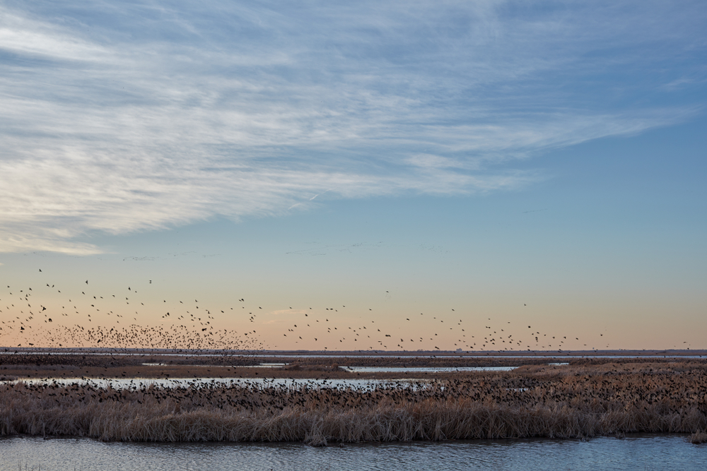 Wetlands with birds flying in the air things to do in Kansas