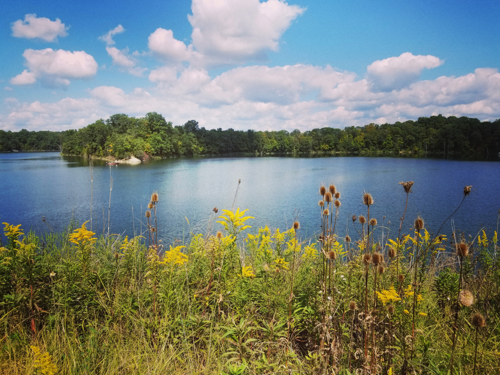 In one of the most loved state parks in Ohio, a blue lake is surrounded by green trees and grassy banks complete with yellow wildflowers.