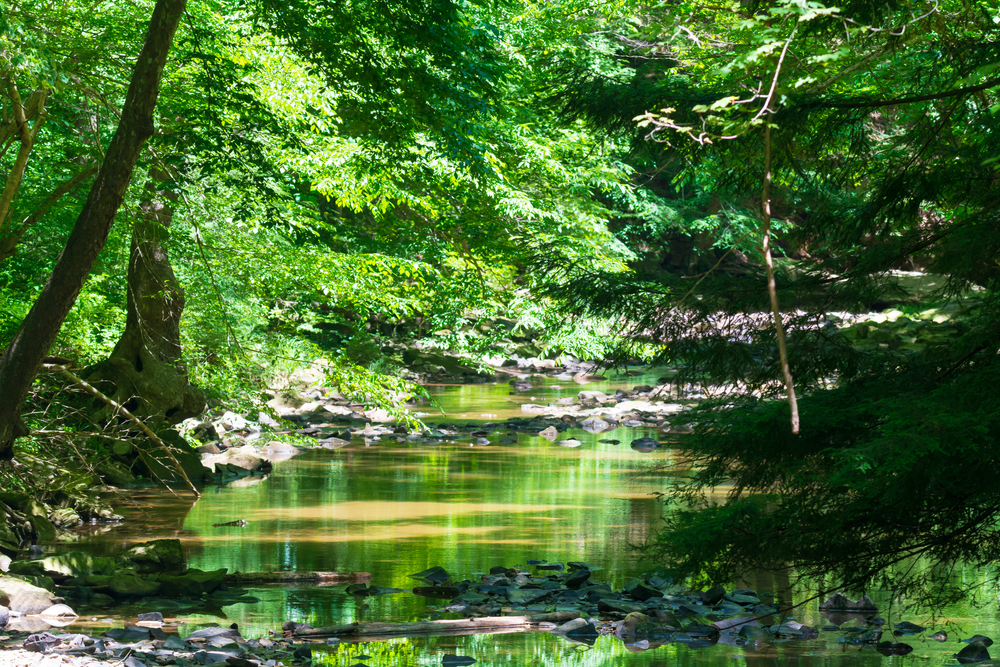 A rocky creek runs through beautiful greenery and lush trees in this state park in Ohio.