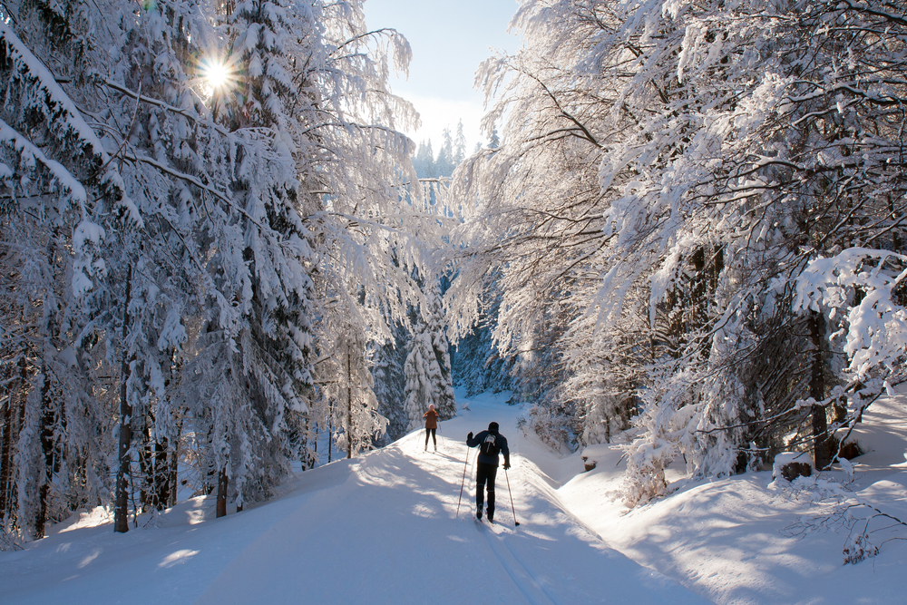Two people cross country skiing in a wooded area covered in thick snow. All the trees are loaded with snow and there is a snow covered path through the trees.