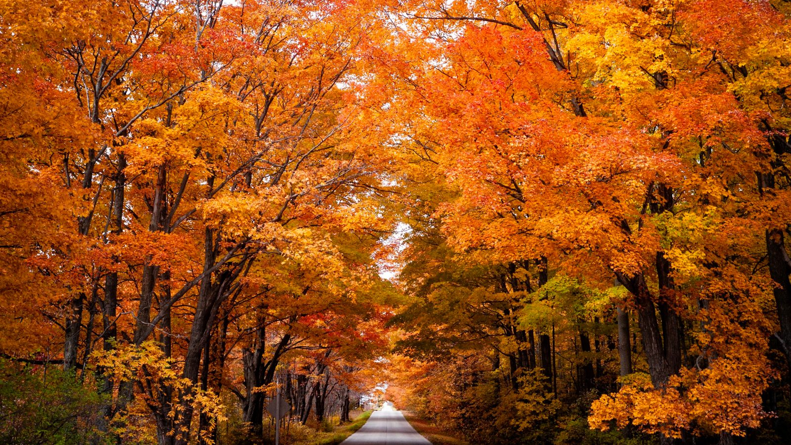 Bright orange leaves on tree tunnel