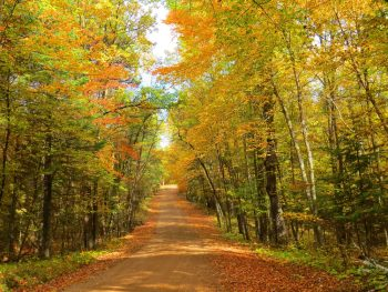 The northwoods in Minnesota. There is a dirt path with dead leaves around it. The trees have yellow, orange, brown, and green leaves. It is a beautiful fall in minnesota view.