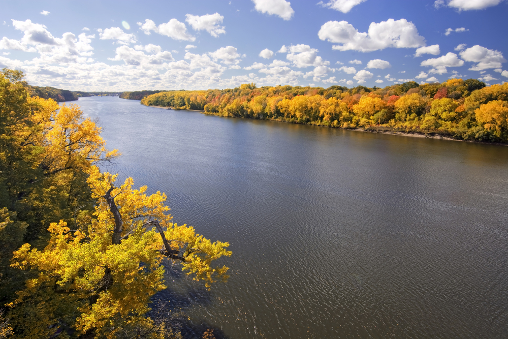 The Mississippi River outside of St. Paul Minnesota with a dense forest on either river bank. The river banks are covered with trees. The trees have yellow, orange, and green leaves. The sky is light blue with big fluffy clouds.