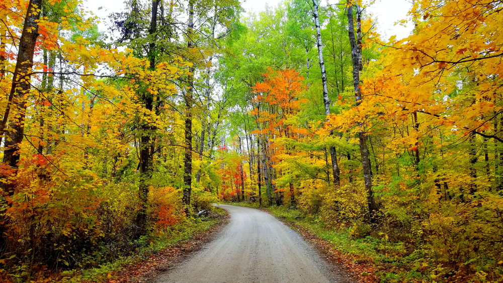 A dirt road surrounded by trees. The trees have green, yellow, and orange leaves. A few of the leaves are red and brown. There are dead leaves on the side of the road and the woods are very dense.