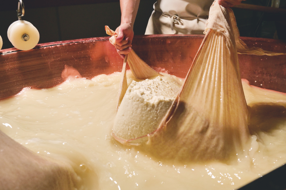 Someone making a large batch of parmesan cheese in a copper tub. They are holding a large cheesecloth with parmesan cheese in it half in a milky liquid.