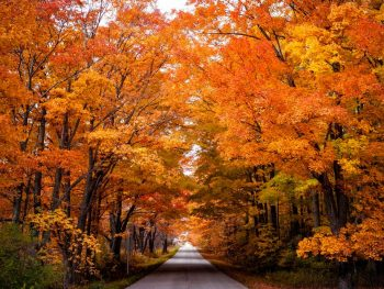 brilliant tree tunnel with orange and red leaves. fall in t he Midwest