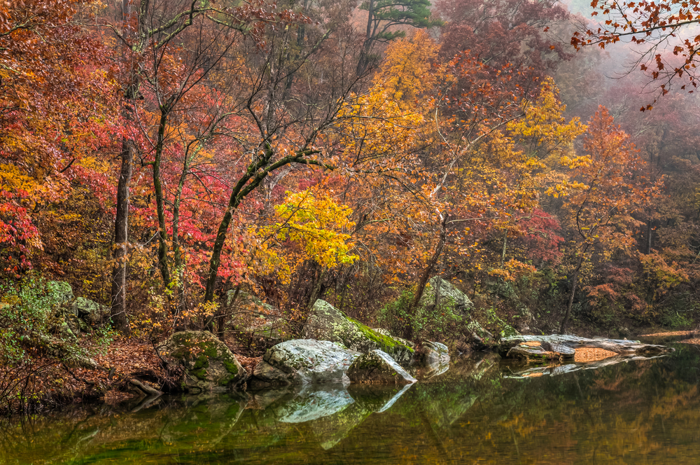 Trees on the bank of a river. The trees have yellow, orange, red, and green leaves. There are rocks covered in moss on the river bank as well as logs. You can see fog in the air.