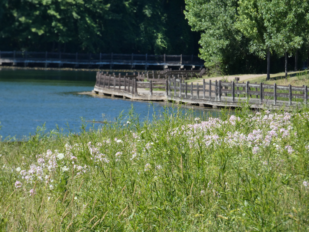 water and a boardwalk with a wild flower medal in the foreground