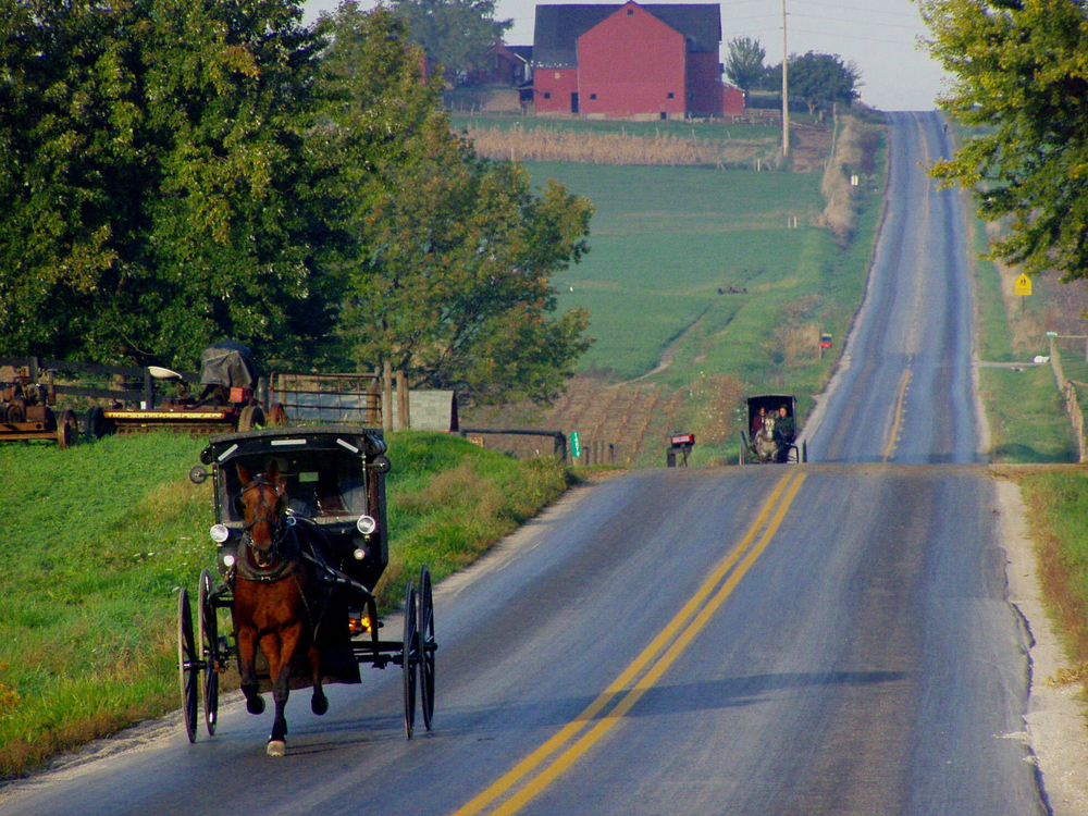 Two horse-and-buggies going down a hilly road. The road is surrounded by farm fields and trees. In the background you can see a large red barn.