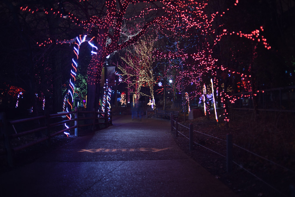 A dark path lit up on both sides by Christmas lights. There are multi colored lights in the trees, candy canes, and other shapes all made of lights. One of the best things to do at Christmas in Chicago.