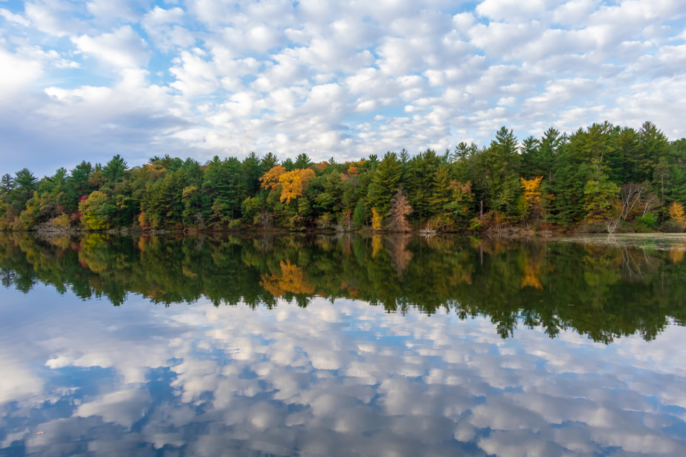 A shoreline on a lake with trees on it. Most of the trees have green leaves, but a few have yellow, orange, and red leaves. The sky is blue with small fluffy clouds. The entire image is perfectly reflected in the water in the lake.