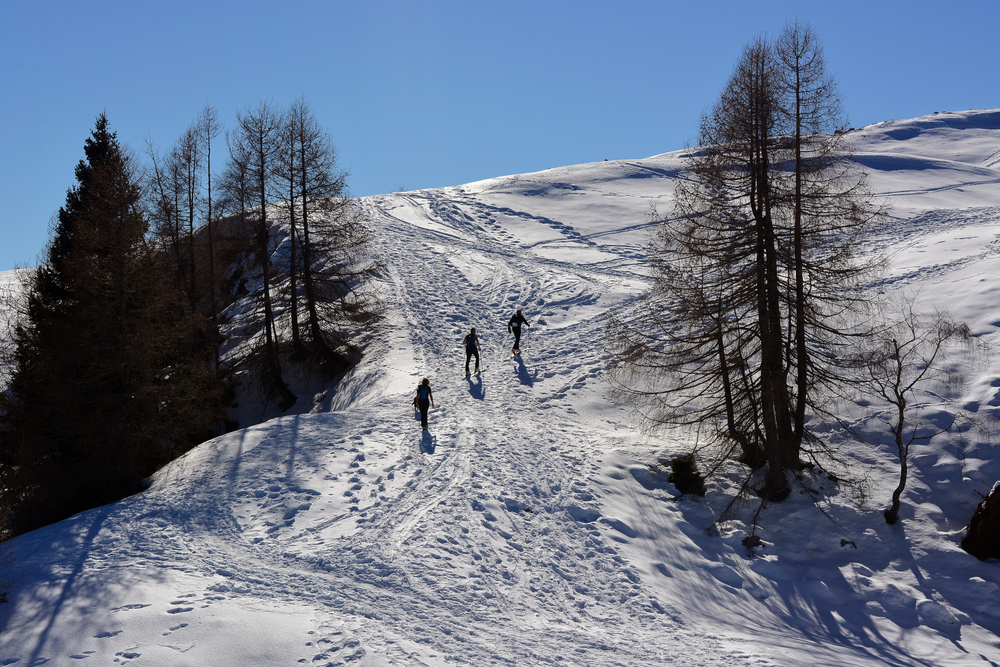 Three people snowshoeing up the side of a snowy mountain. You can see tracks where people have either skied or snowshoed before. There are a few trees with no leaves on them and one tree that looks like a large pine tree. It is sunny and there is a bright blue sky.