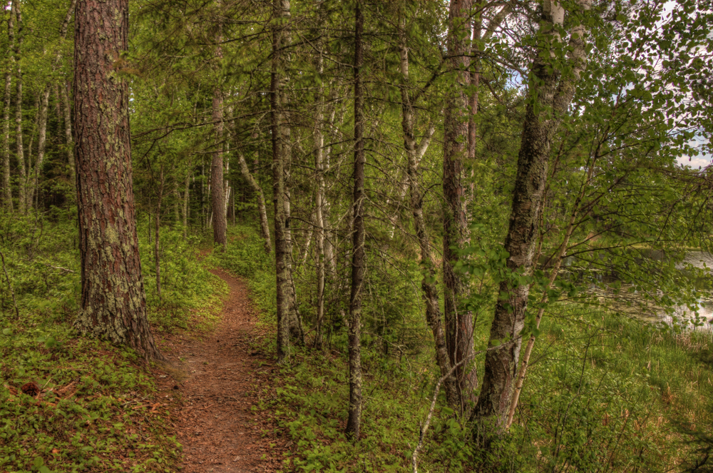 A wooded trail in a state park in Wisconsin. The trail is dirt and narrow with trees and grasses with green leaves on either side of it.