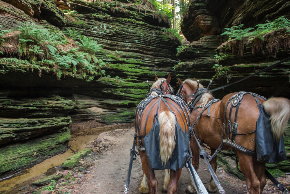 A pair of horses that appear to be attached to a carriage walking into a narrow path in a canyon. The horses are brown with blonde tails and manes. The rocky canyon is covered in moss and ferns. You can just barely see the sky through tall trees on top of the rocks. One the coolest things to do in Wisconsin Dells.