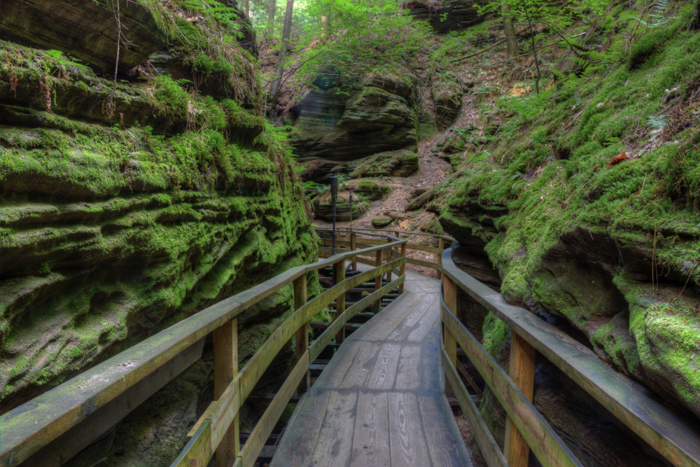 Looking down a long narrow and curved wooden plank bridge between a canyon. The plank bridge has a railing. On the canyon rocks you can see moss growing and up higher on the rocks you can see large trees growing. One of the best things to do in Wisconsin Dells.