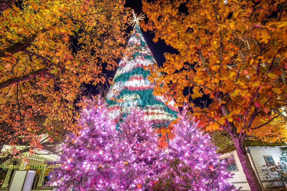 A tall Christmas tree next to orange trees in Branson, Missouri.