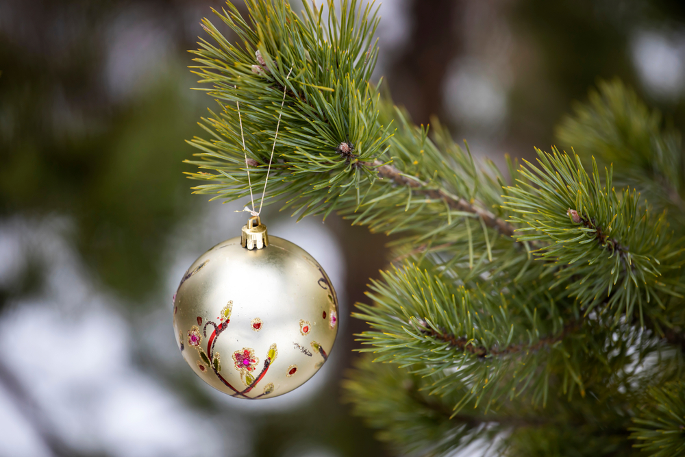 White ornament with red trim hanging from evergreen branch.