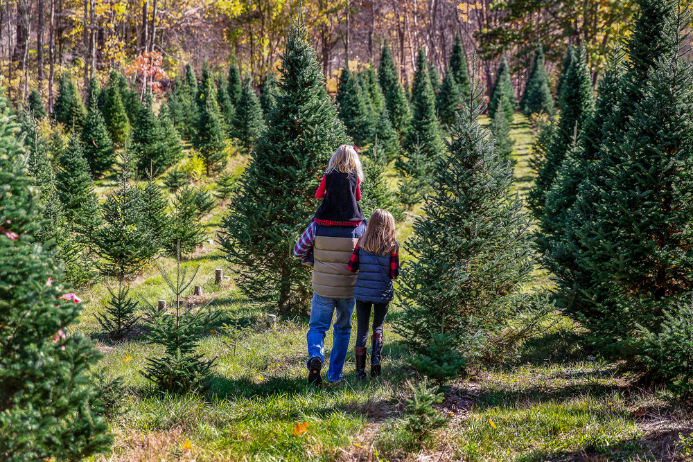 Father, mother, and child hoisted on top of father's shoulders, walking through Ohio Christmas tree farm surrounded by evergreen trees.