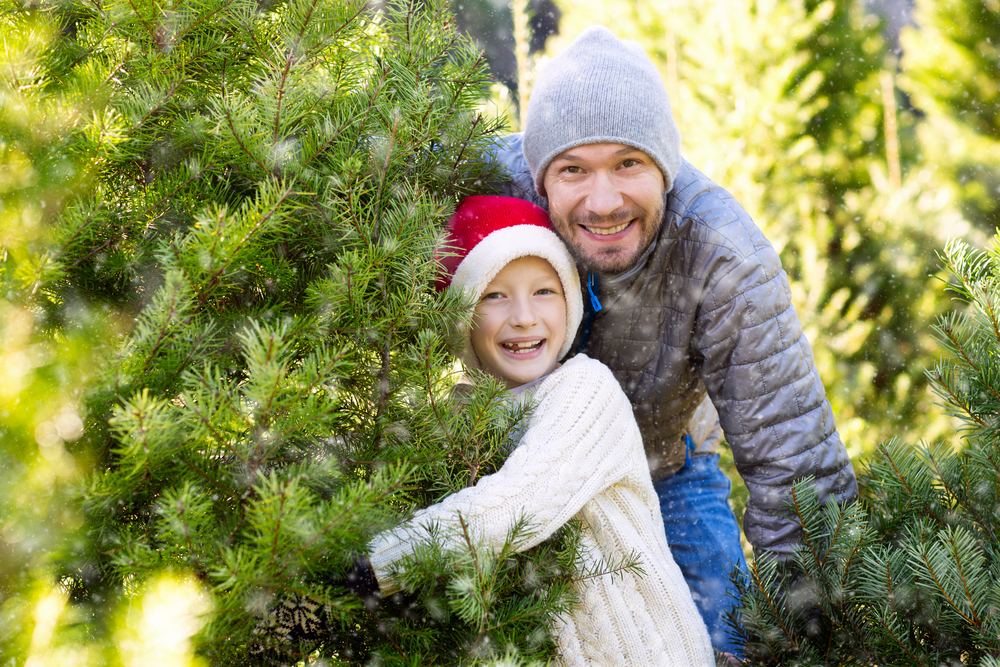 Smiling Caucasian father and son (wearing red Santa hat) selecting Ohio Christmas tree.