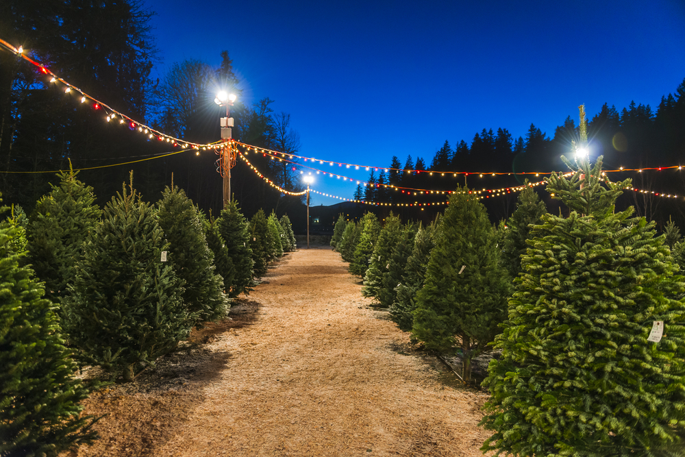 Rows of evergreen trees with colorful Christmas lights strung overhead. Night sky in background. Christmas tree farms in Ohio.
