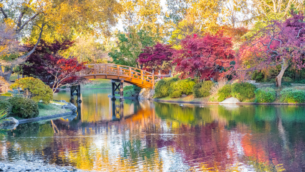 A lake and wooden bridge surrounded by fall foliage. One of the best things to do in St Louis