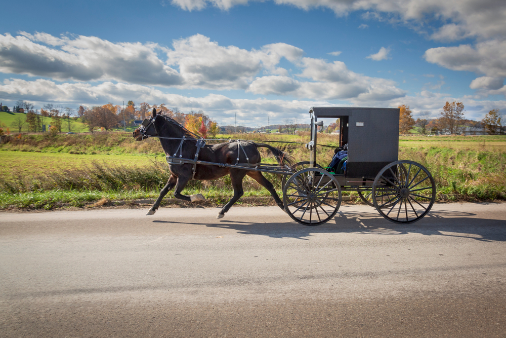 A horse and buggie strolling down a road in the Ohio Amish countryside. The buggie is black and the horse is brown. On the side of the road you can see rolling fields, and trees with no leaves and some with orange leaves, and in the far distance hills.