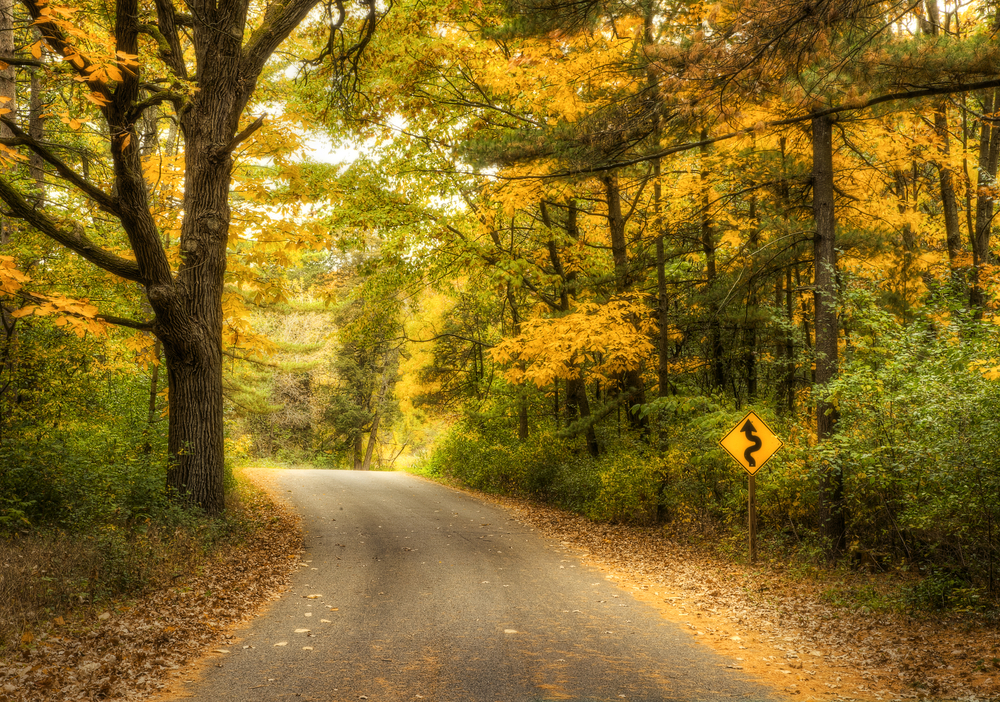 A winding road surrounded by dense forest on either sides. The road is paved and the trees have green, yellow, and orange leaves. On the ground you can see dead leaves and pine needles and there is a yellow 'curve ahead' sign.