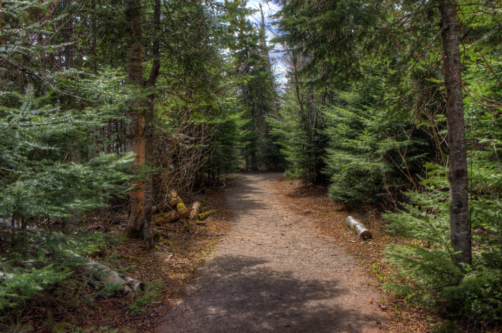 A hiking trail through the trees. Hiking the Superior Trail is one of the things to do in Grand Marais