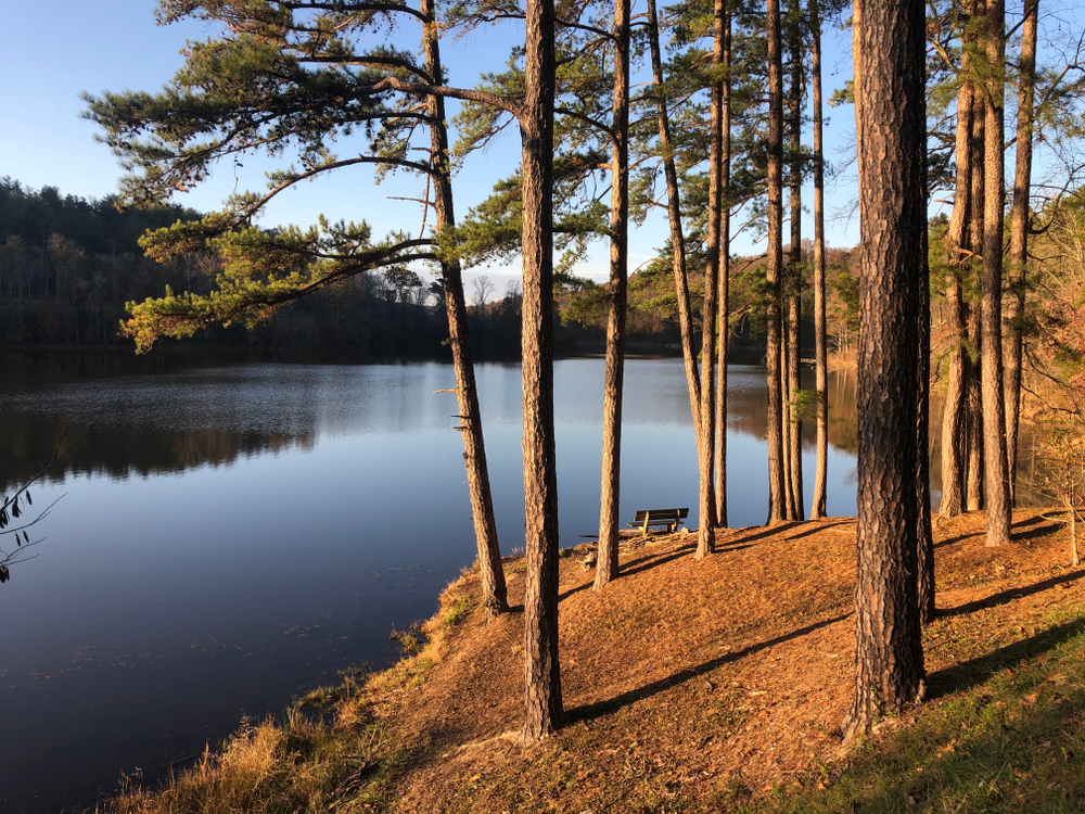Bench at dusk viewed through pine trees overlooking blue lake.