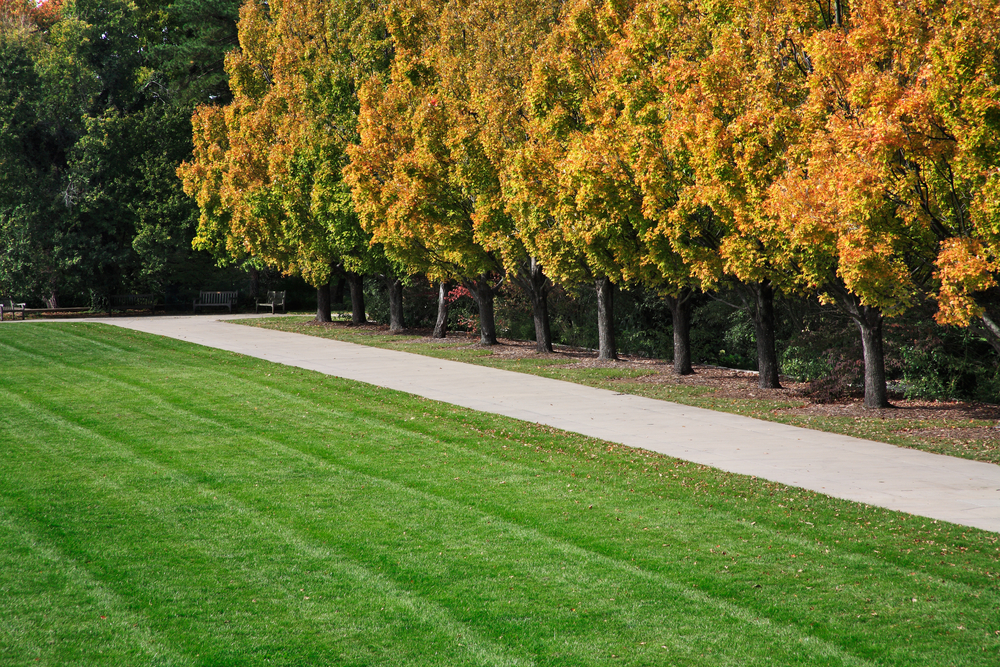 A green lawn with a sidewalk and a row of trees. The trees have yellow, orange, and green leaves.